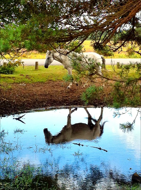 Spirit of the Forest, the New Forest