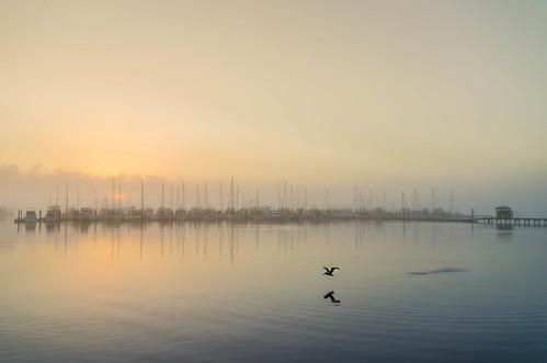 fog marina sunrise dock pelican stuartflorida