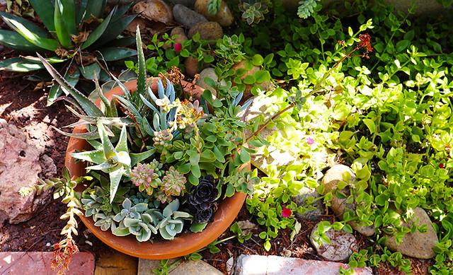 succulents in a pot in a garden