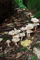 row of fungi