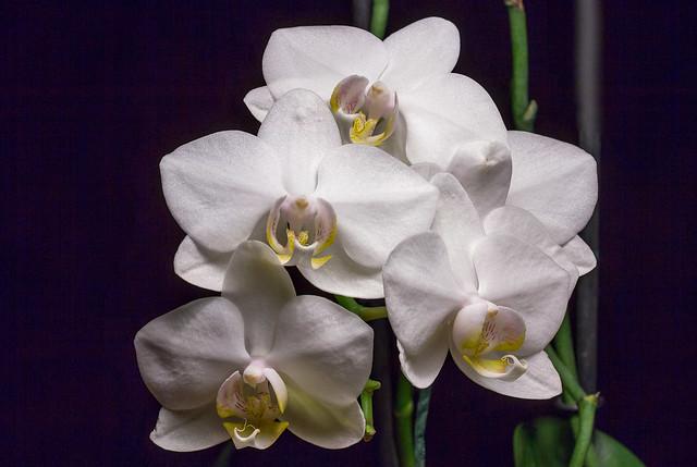 Like White Moths - TNY_4988S07