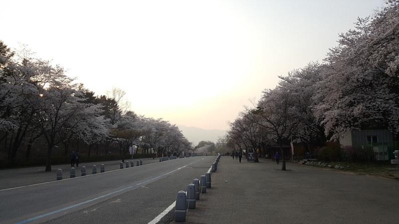 Nguyen, Anna; South Korea - Episode 12 (6)