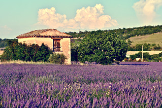 Provence | by frans16611