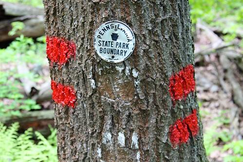 statepark tree sign pennsylvania trail bark marker boundary blazing blueknob trailblazing mountainviewtrail
