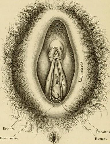 Image from page 29 of Pathologische Anatomie der weiblich