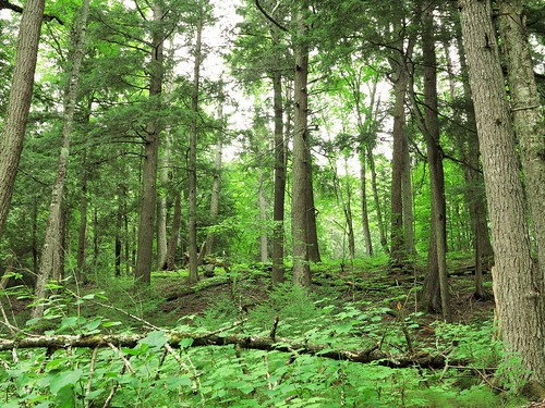 forest michigan upperpeninsula northwoods deltacounty publicland hiawathanationalforest northernforest canong1x haymeadowcreektrail