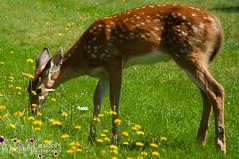Oh Deer-7023