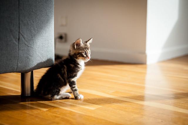 Minute - Foster Kitten