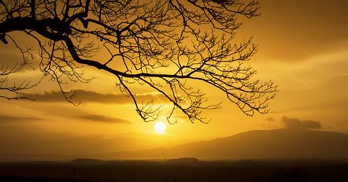 criffel sunset landscape tree