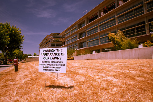 CalPERS and the Drought | by Kevin Cortopassi