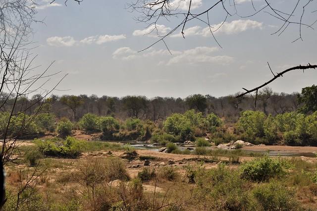 Kruger national park landscape