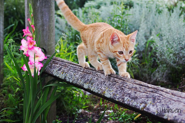 The Daring Young Cat