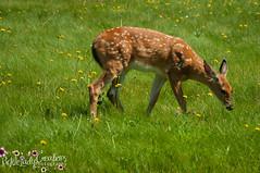 Oh Deer-7014