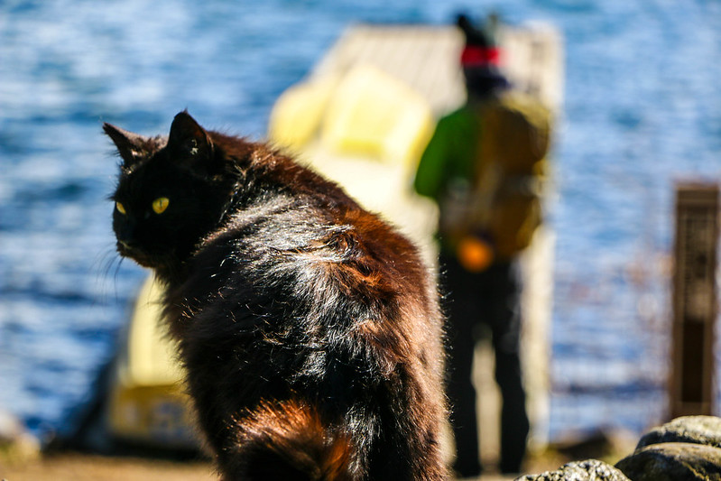 田貫湖キャンプ場の猫とミッキー