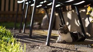 Katze | Projekt 365 | Tag 265
