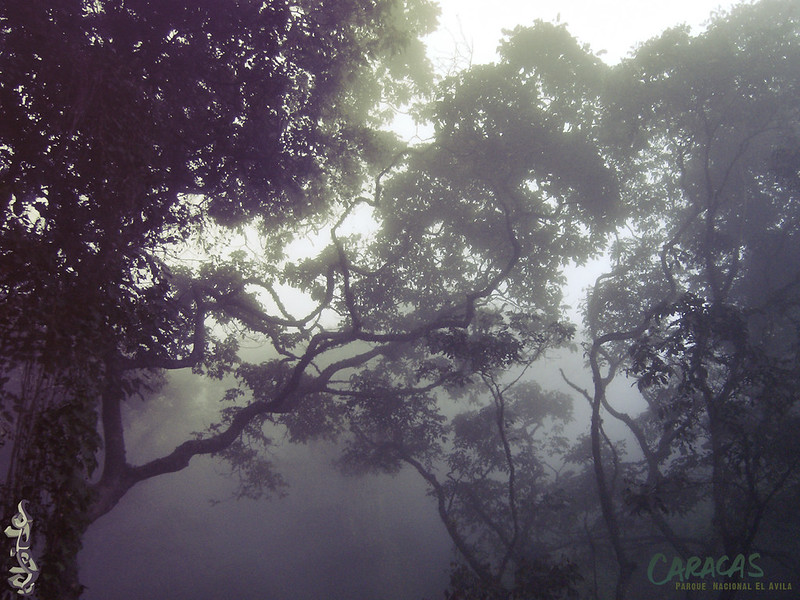 WP-Avila-keloide-04-humeda