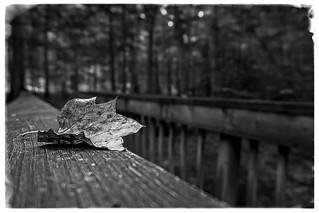 Fall III