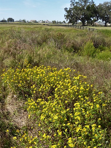 thevillagesfl marshland trail nature flora plants landscape grasses yellow blooms blossoms flowers