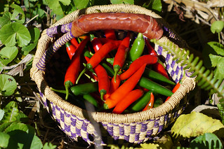 Chilli Basket