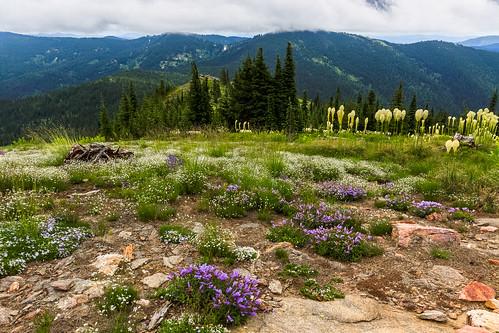 unitedstates idaho wildflowers scenicviews grandmothermountain stjoenationalforest idahopanhandlenationalforests