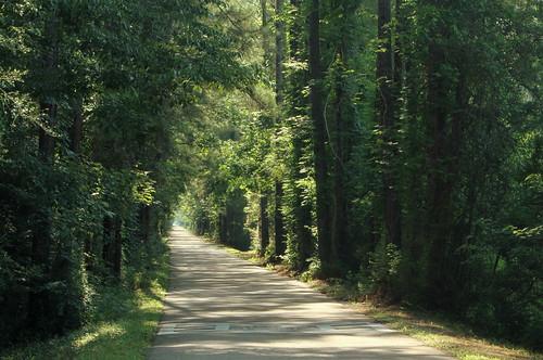 lana nature forest landscape spring louisiana path trace pines railstotrails tammany lacombe gramlich sttammanyparish canoneosrebelt2i lanagramlich dailynaturetnc14 may212014
