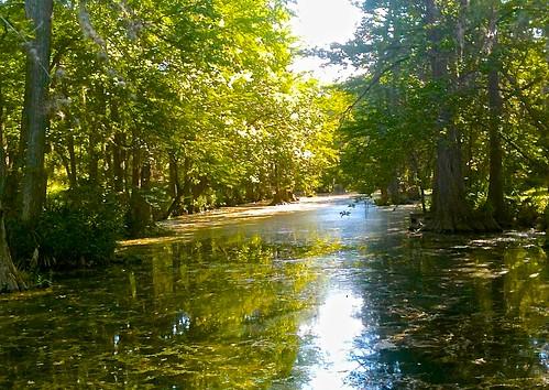 green landscape texas springs waterscape aquifer rebeccacreek springflow