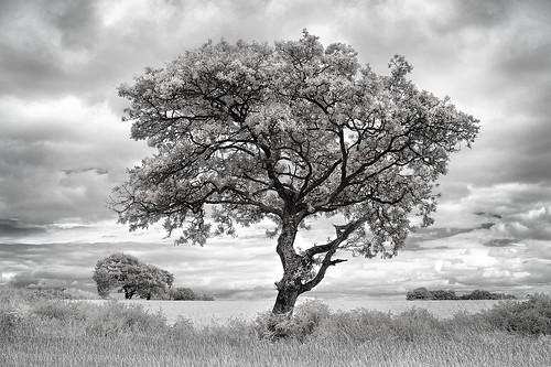 Treescape in IR
