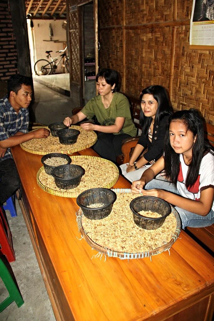 Kopi Luwak   Mataram Kopi Luwak, Yogyakarta. The defecated ...