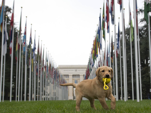New dog for K9 Unit | by UN Geneva