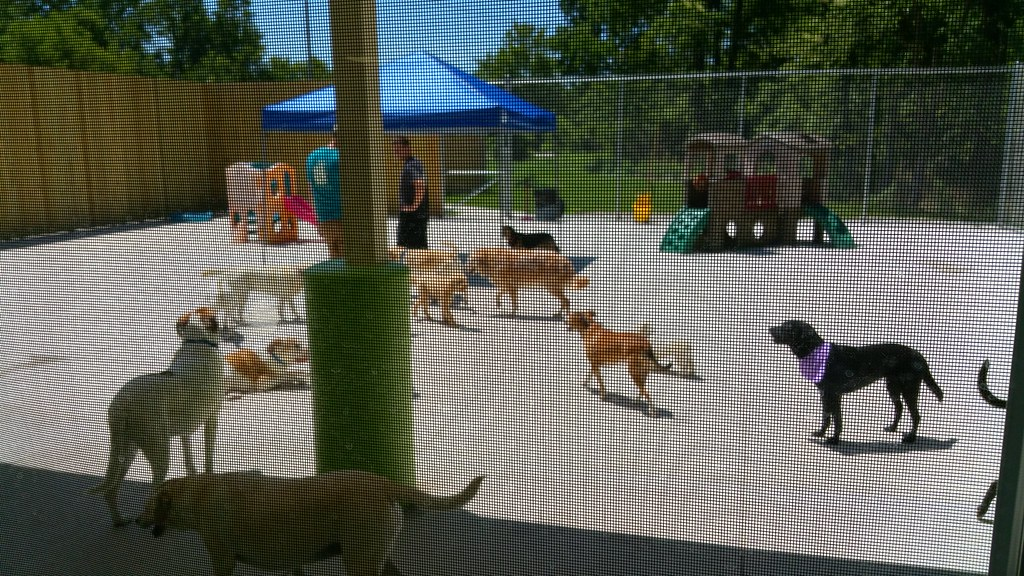 Ingham County Animal Shelter Closed For Public Health Concerns