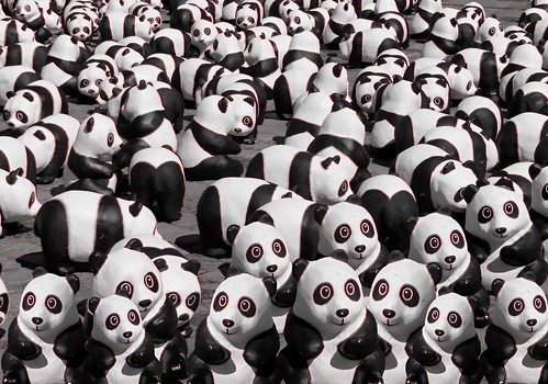 Too many Panda's around here!