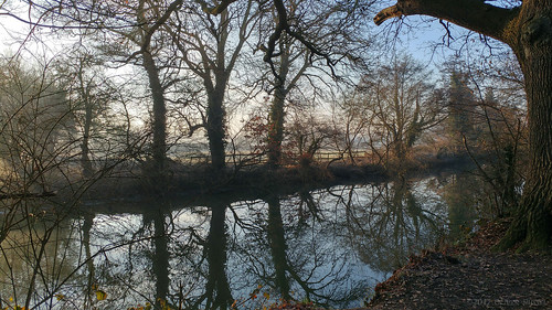 2017 oru uk surrey hersham hershamriversidepark river fog morning winter rivermole tree trees water reflection sunrise park mobilephotography fence widescreen 169