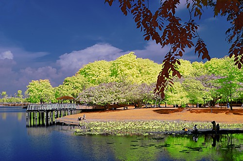 park trees panorama lake reflection green water colors landscape photographer jetty infrared shooting outing cyberjaya recreational inframerah