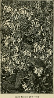 "Image from page 866 of ""The English flower garden and home grounds : design and arrangement shown by existing examples of gardens in Great Britain and Ireland, followed by a description of the plants, shrubs and trees for the open-air garden and their cul 