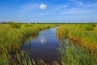 Freeport Wetlands   by Uffdah!!!