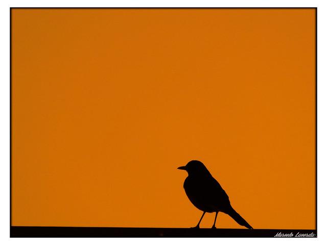 """Amar é ter um pássaro pousado no dedo.  Quem tem um pássaro pousado no dedo sabe que,  a qualquer momento, ele pode voar"""" Rubem Alves"""
