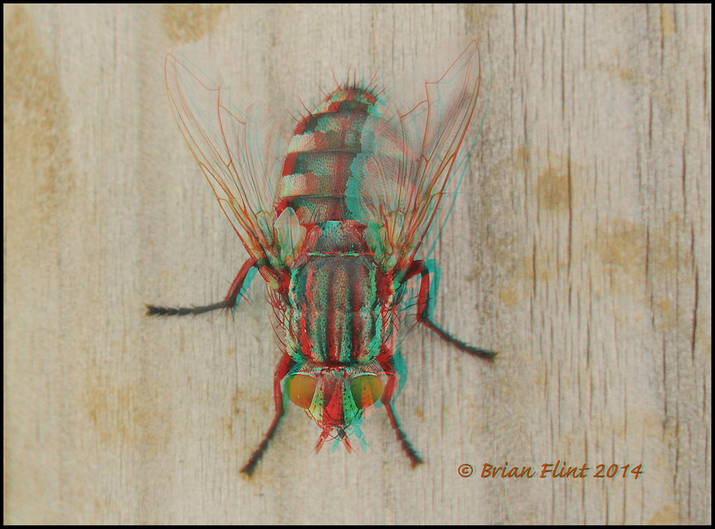 POP-up Fly  - 3d anaglyph