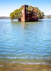 SS Ayrfield Shipwreck-8