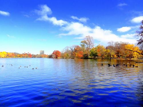 newyork brooklyn dmitriyfomenko image fall autumn sky clouds prospectpark reflection foliage
