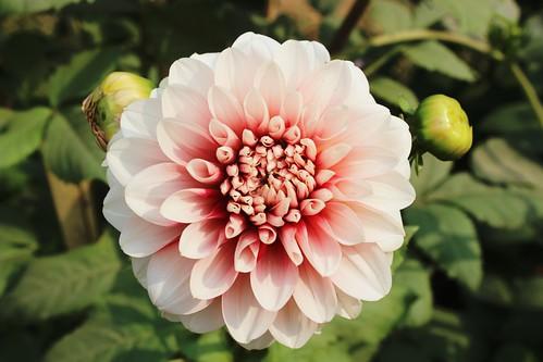 Bloom Boom Bloom