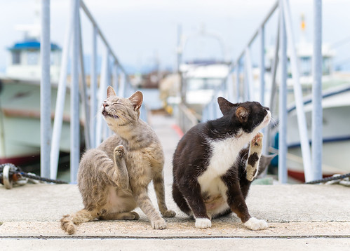 double itchy | by torne (where's my lens cap?)