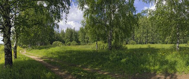 birchland