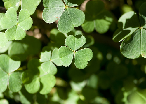 DSC_6512_Clover | by Conor Lawless