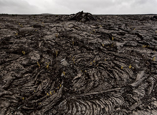 Lava Field 5