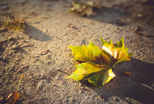 333366 366 autumn dead fallen green ground leaf light project shadows sunset texture warm yellow
