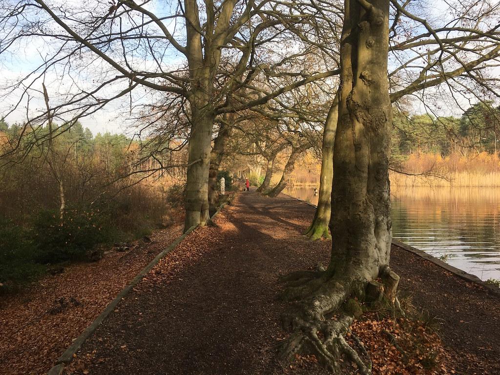 Along the pond Oxshott to Ashtead walk