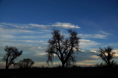 sky tree trees silhouette silhouettes cloud clouds colorado eveningsky dusk sunset branches limbs november cottonwood cottonwoods cottonwoodtree cottonwoodtrees horizon backlit cielo everybodylovesasunset atardecer himmel