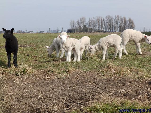 23-03-2013  Zoetermeer (42)