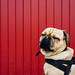 Dog Dienstag! by tinto