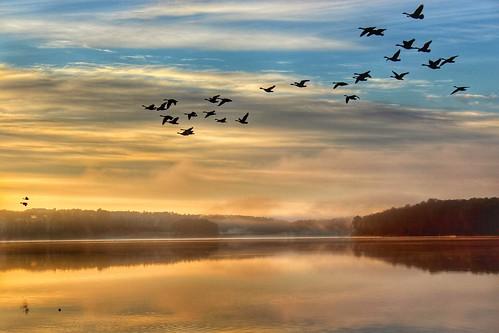 canadiangeese sunrise